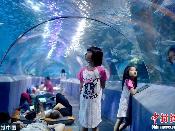 夜宿海洋馆!探秘海底世界奇妙夜