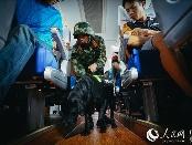 特写:中越边境边防缉毒犬的日常生活